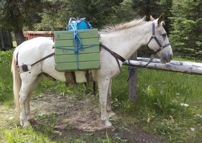 packedhorse